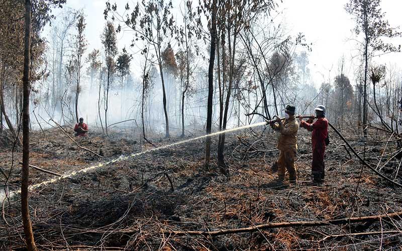 Petugas Balai Besar Konservasi Sumber Daya Alam (BBKSDA) Riau memadamkan kebakaran di kawasan Suaka Margasatwa Giam Siak Kecil, Kabupaten Bengkalis, Provinsi Riau, Selasa (2/3/2021). BBKSDA Riau memperkirakan luas kebakaran sudah mencapai 100 hektare yang diduga dipicu oleh cuaca kemarau dan aktivitas perambahan. ANTARA/BBKSDA Riau