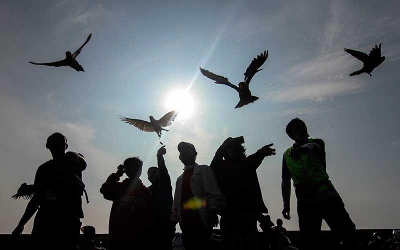 Pecinta burung paruh bengkok melatih terbang peliharaannya di kawasan Tanah Merah, Depok, Jawa Barat, Sabtu (6/3/2021). Berbagai jenis burung paruh bengkok tersebut dilatih terbang selama mungkin tanpa hinggap di tempat lain dan kembali kepada pemiliknya dengan panduan pluit dan pemberian makan. ANTARA FOTO/Asprilla Dwi Adha