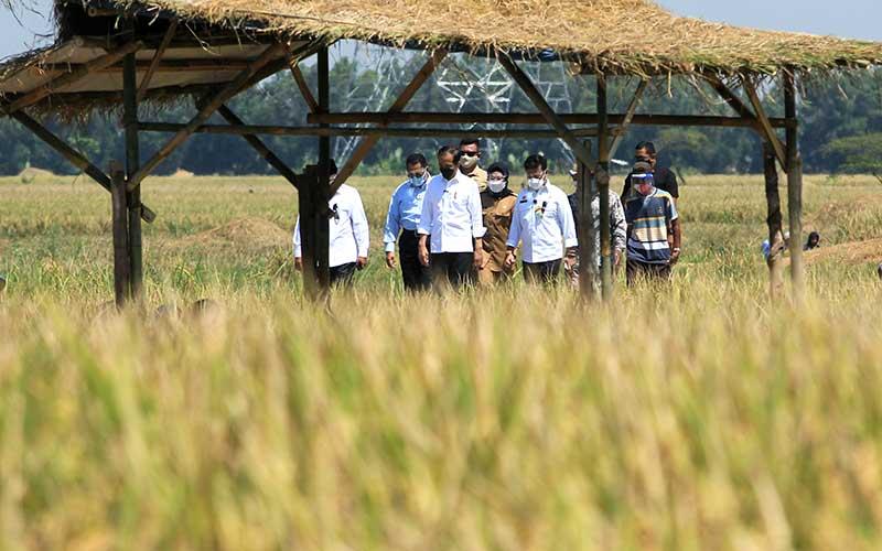 Presiden Joko Widodo (tengah) didampingi Menteri Pertanian Syahrul Yasin Limpo (ketiga kanan), Dirut Perum Bulog Budi Waseso (kedua kiri) dan Bupati Indramayu Nina Agustina (keempat kanan) menghadiri panen raya padi di desa Wanasari, Bangodua, Indramayu, Jawa Barat, Rabu (21/4/2021). Selain menghadiri panen raya, Presiden Jokowi juga berdialog untuk menerima keluhan para petani. ANTARA FOTO/Dedhez Anggara