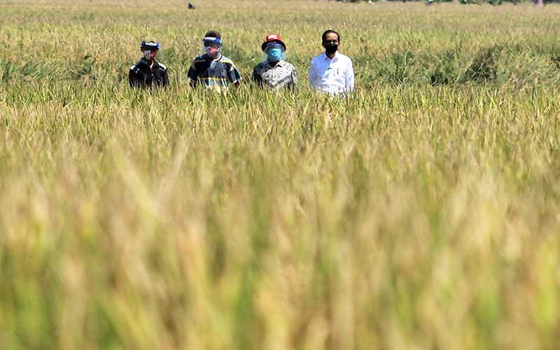 Presiden Joko Widodo (kanan) menghadiri panen raya padi di desa Wanasari, Bangodua, Indramayu, Jawa Barat, Rabu (21/4/2021). Selain menghadiri panen raya, Presiden Jokowi juga berdialog untuk menerima keluhan para petani. ANTARA FOTO/Dedhez Anggara