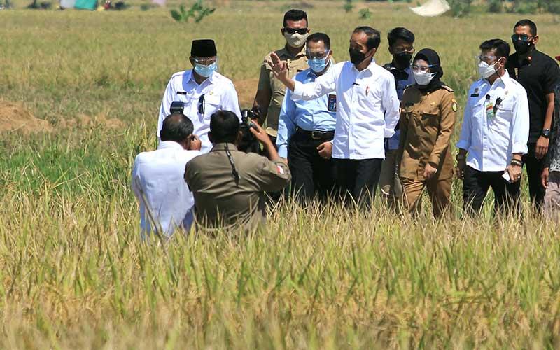 Presiden Joko Widodo (tengah) didampingi Menteri Pertanian Syahrul Yasin Limpo (kedua kanan), Dirut Perum Bulog Budi Waseso (kelima kanan), Wakil Gubernur Jawa Barat Uu Ruzhanul Ulum (kiri) dan Bupati Indramayu Nina Agustina (ketiga kanan) menghadiri panen raya padi di desa Wanasari, Bangodua, Indramayu, Jawa Barat, Rabu (21/4/2021). Selain menghadiri panen raya, Presiden Jokowi juga berdialog untuk menerima keluhan para petani. ANTARA FOTO/Dedhez Anggara