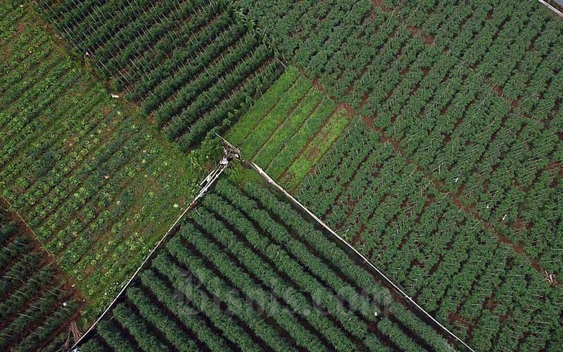 Foto udara kawasan pertanian di Desa Lembanna, Kabupaten Gowa Sulawesi Selatan, Minggu (16/5/201). Badan dan Pusat Statistik (BPS) mengatakan Nilai Tukar petani (NTP) Gabungan Provinsi Sulawesi Selatan Bulan April 2021 sebesar 98,09 atau turun 0,02 persen dibandingkan dengan NTP Bulan Maret 2021 sebesar 98,11 persen. Bisnis/Paulus Tandi Bone