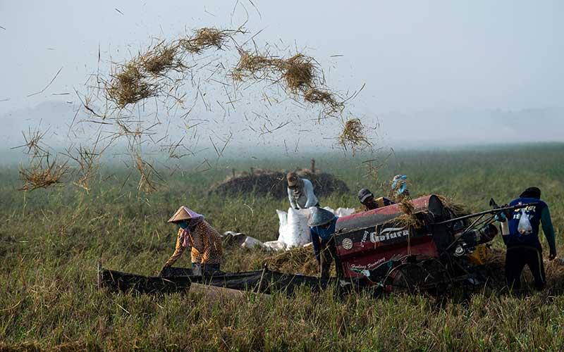 Petani merontokan gabah dengan mesin saat panen di Desa Kertawaluya, Kabupaten Karawang, Jawa Barat, Selasa (18/5/2021). Perum Bulog memastikan tidak akan impor beras untuk tahun 2021karena masih terus melakukan penyerapan beras dalam negeri. Sementara itu hingga 17 Mei 2021 stok beras yang ada di Bulog telah mencapai 1.395.376 ton. ANTARA FOTO/Sigid Kurniawan