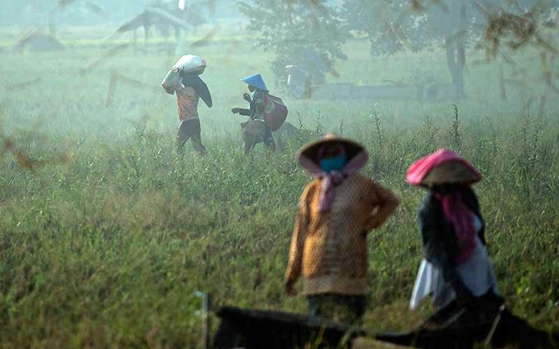 Petani beraktivitas saat panen padi di Desa Kertawaluya, Kabupaten Karawang, Jawa Barat, Selasa (18/5/2021). Perum Bulog memastikan tidak akan impor beras untuk tahun 2021karena masih terus melakukan penyerapan beras dalam negeri. Sementara itu hingga 17 Mei 2021 stok beras yang ada di Bulog telah mencapai 1.395.376 ton. ANTARA FOTO/Sigid Kurniawan