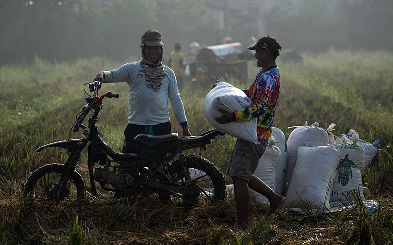 Petani mengangkut karung berisi gabah hasil panen di Desa Kertawaluya, Kabupaten Karawang, Jawa Barat, Selasa (18/5/2021). Perum Bulog memastikan tidak akan impor beras untuk tahun 2021karena masih terus melakukan penyerapan beras dalam negeri. Sementara itu hingga 17 Mei 2021 stok beras yang ada di Bulog telah mencapai 1.395.376 ton. ANTARA FOTO/Sigid Kurniawan