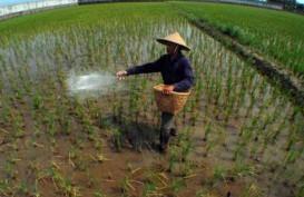 Kesejahteraan Petani Menurun Sepanjang 2013