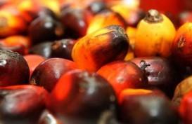 Harga CPO dan Kakao RI Diupayakan Jadi Referensi Dunia