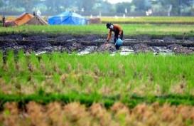 Kredit Mikro Didorong Masuki Pertanian dan Perikanan