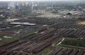Pengelolaan Hutan Tanpa Roadmap