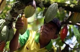 90% Perkebunan Kakao Rakyat Dijabar Pakai Bibit Asal-Asalan