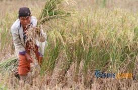 KTNA: Petani Harus Bisa Dapatkan Rp50 juta/ha/tahun
