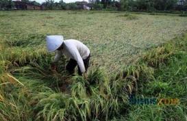 Ketergantungan Impor Beras Indonesia Masih Tinggi