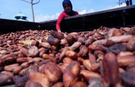 Industri Kakao Berpotensi Kekurangan Pasokan