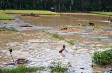 JELAJAH PANTURA: Ratusan Hektare Sawah di Pati Terendam Banjir