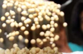 Permintaan dari China Melonjak, Kedelai Menguat