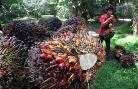 Sebanyak 167 Perusahaan Sawit Riau Ajukan ISPO