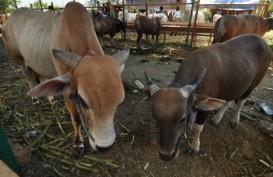 Kejar Swasembada daging, Kementan Perbaiki Perbibitan Ternak Lokal
