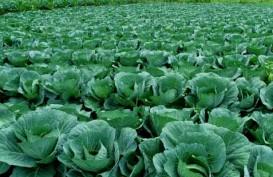 Malaysia Tertarik Beli Sayuran dari Sulawesi Selatan