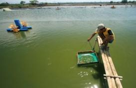 Pembudidaya Terkena Banjir Akan Dapat Bantuan Pakan & Benih