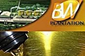Beban dan Rugi Kurs Melonjak, Laba BW Plantation Turun 30,67%