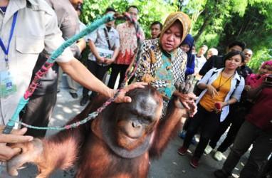 Areal Kebun Binatang Surabaya Diperluas