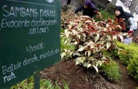 TANAMAN OBAT: Sumsel Bangun Kebun Raya Herbal Seluas 100 Hektare