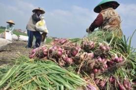 Petani hortikultura Terdampak Kelud dapat Relaksasi…