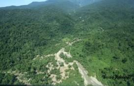 APP dan SMF Dukung Pengembangan Hutan Rendah Karbon