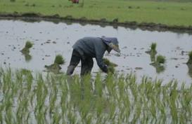 Penetapan Luas Lahan Pertanian di Jabar Masih Alot