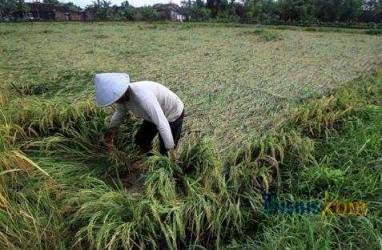 Produk Pangan Brasil Terancam Pemanasan Global
