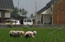 250.000 Ha Lahan Pertanian Di Jabar Terancam Lenyap