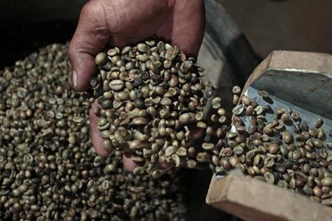 Harga kopi arabika melonjak 94% pada tahun ini menjadi 2,148 di bursa ICE Futures New York  - bisnis.com