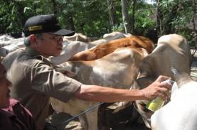 Indonesia Berpeluang Ekspor Sperma Beku Sapi Potong…