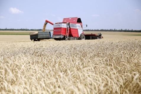 Pertanian gandum. Harga terkerek sanksi untuk Rusia - Reuters