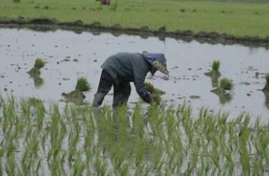 Tiga Wilayah Balai Benih Topang Pertanian Jateng
