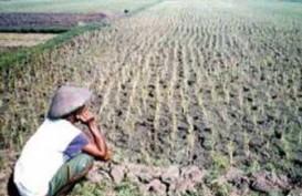 PETANI: Pemilu Ganggu Produksi Pangan Nasional