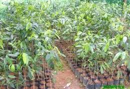 Tanam 4 Miliar Pohon, SBY: Kalau Ragu Silakan Hitung Sendiri