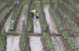 Mentan Suswono 'Pasrah' Lahan Pertanian Terus Menyusut