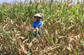 Meningkat, Alokasi Kredit Pertanian di Jateng