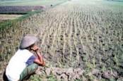 Pemerintah Harus Lindungi Petani Kecil