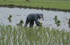 Kementerian Pertanian Targetkan Cetak Sawah 50.000 Ha