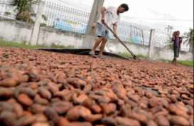 Pabrik Kakao Cargill Beroperasi Akhir 2014