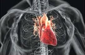 5 Makanan/Minuman Pencegah Penyakit Jantung