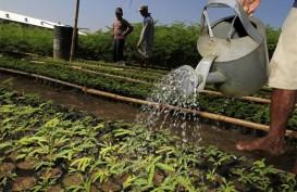 IPBH Jamin Benih Hortikultura Didominasi Produk Lokal