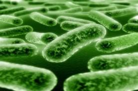 GEDUNG INACC: Indonesia Punya Pusat Mikroba Berstandar…