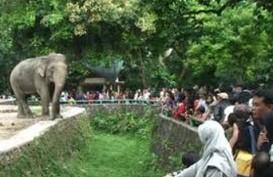 LIBUR LEBARAN: Kebun Binatang Ragunan Paling Banyak Dikunjungi