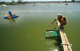Pemkot Pekalongan Danai Instaliasi Listri Tambak Percontohan Rp1 Miliar