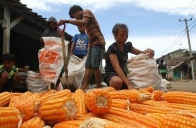 DISPERINDAG SULUT: Pekan Ini, Pasar Lelang Komoditas Agro Digelar di Minahasa