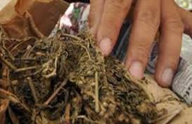 Supir Truk Sampah Selundupkan 2.172 Gram Ganja Ke Lapas, Diringkus