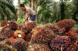 LIMBAH SAWIT UNTUK LISTRIK: Sukses di Riau, ESDM Segera Ekspansi ke Papua